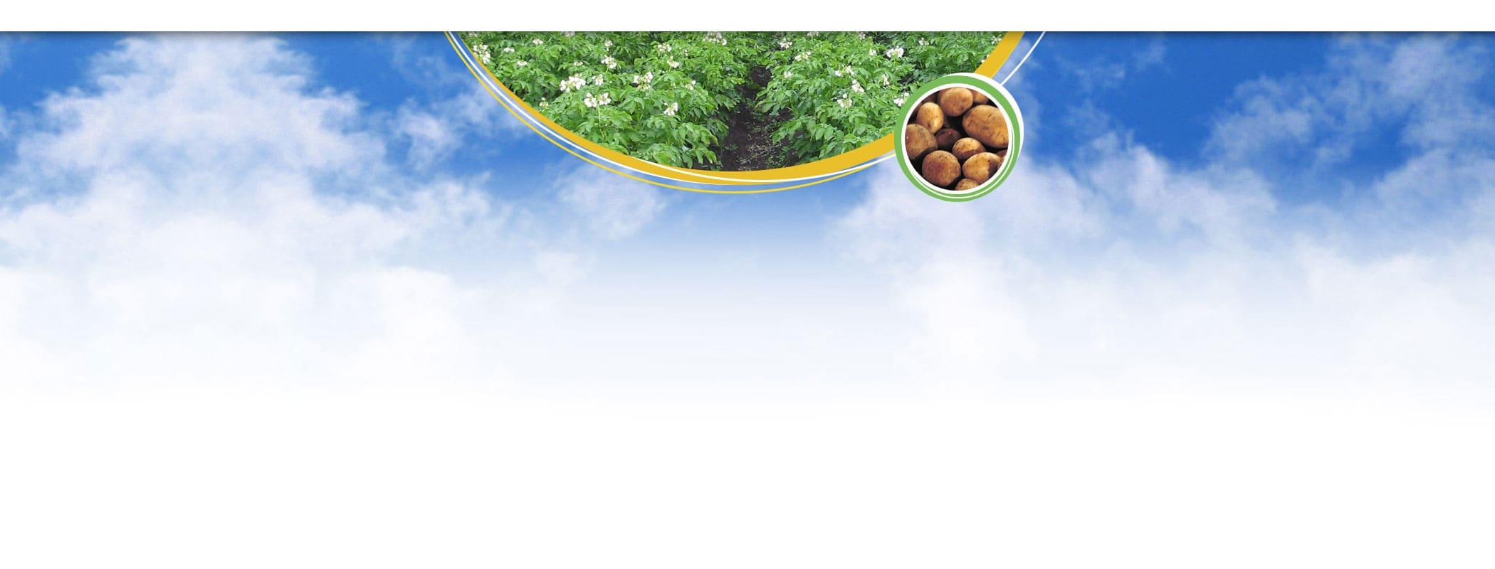 banner ziemniaki