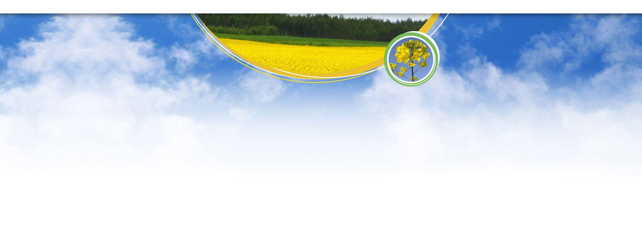 banner rzepak