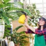 rosliny ozdobne 150x150 - Czym są chelaty nawozowe?