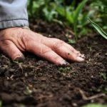 Przygotowanie do sadzenia 150x150 - Podstawowe zasady nawożenia roślin