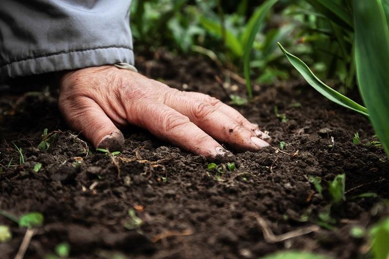 Przygotowanie do sadzenia