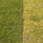 trawnik 150x150 - Nawożenie trawników bez tajemnic