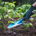 nawozenie roslin 150x150 - Ekonomiczne nawożenie roślin. Na czym to polega?